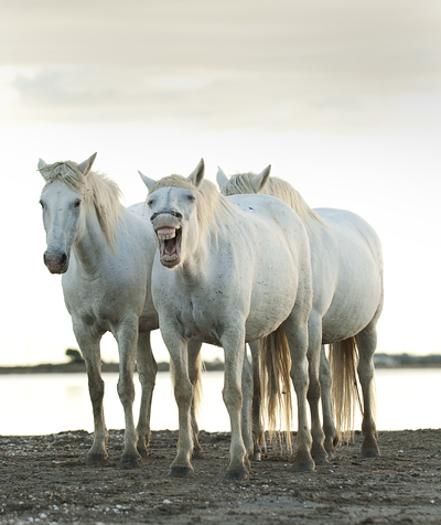 image of horses on a beach