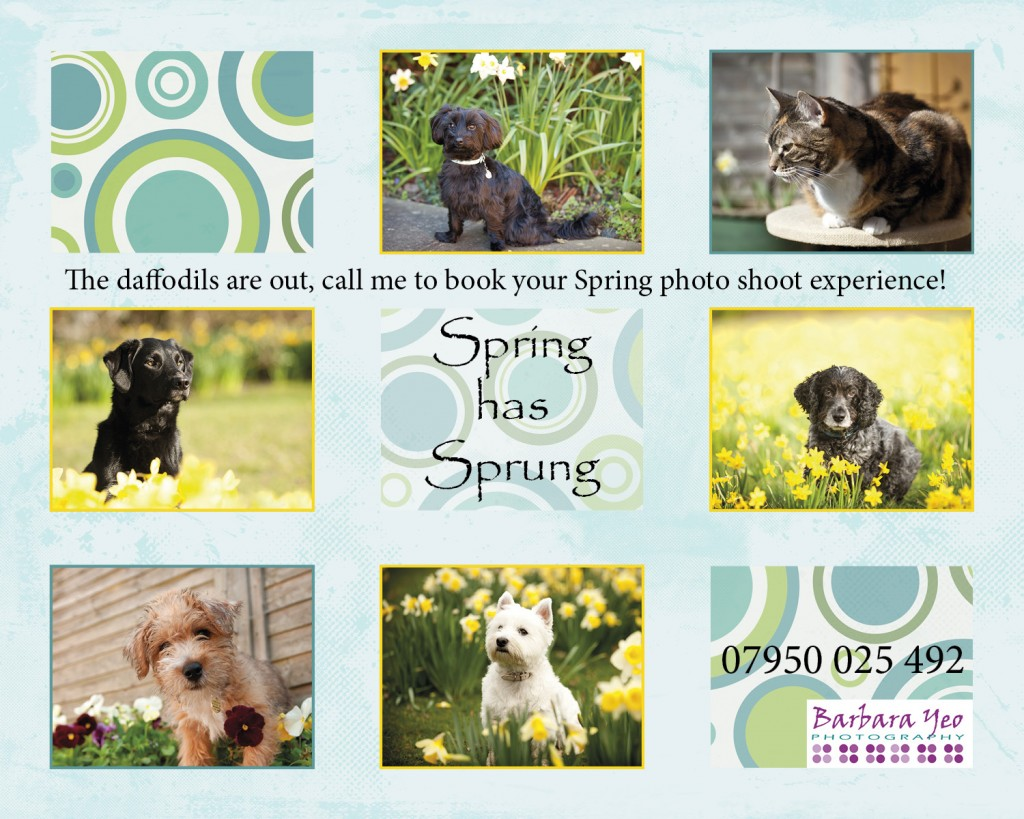 Photos of pets in Spring