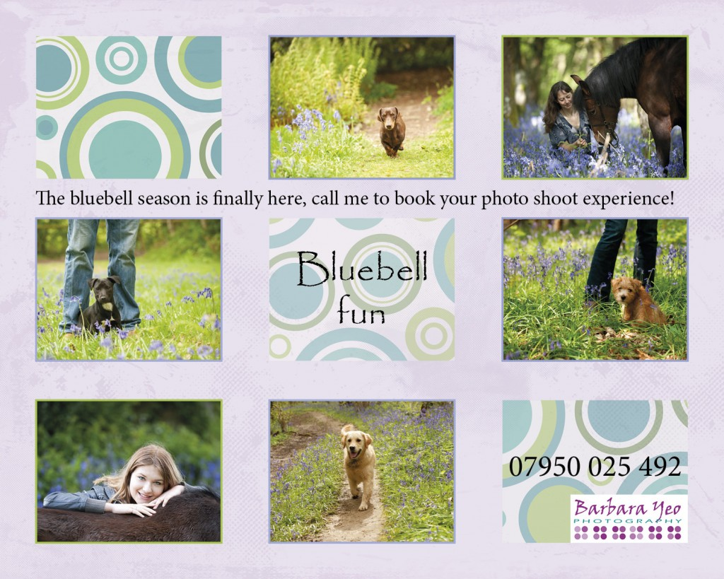 photos of dogs and horses in bluebells